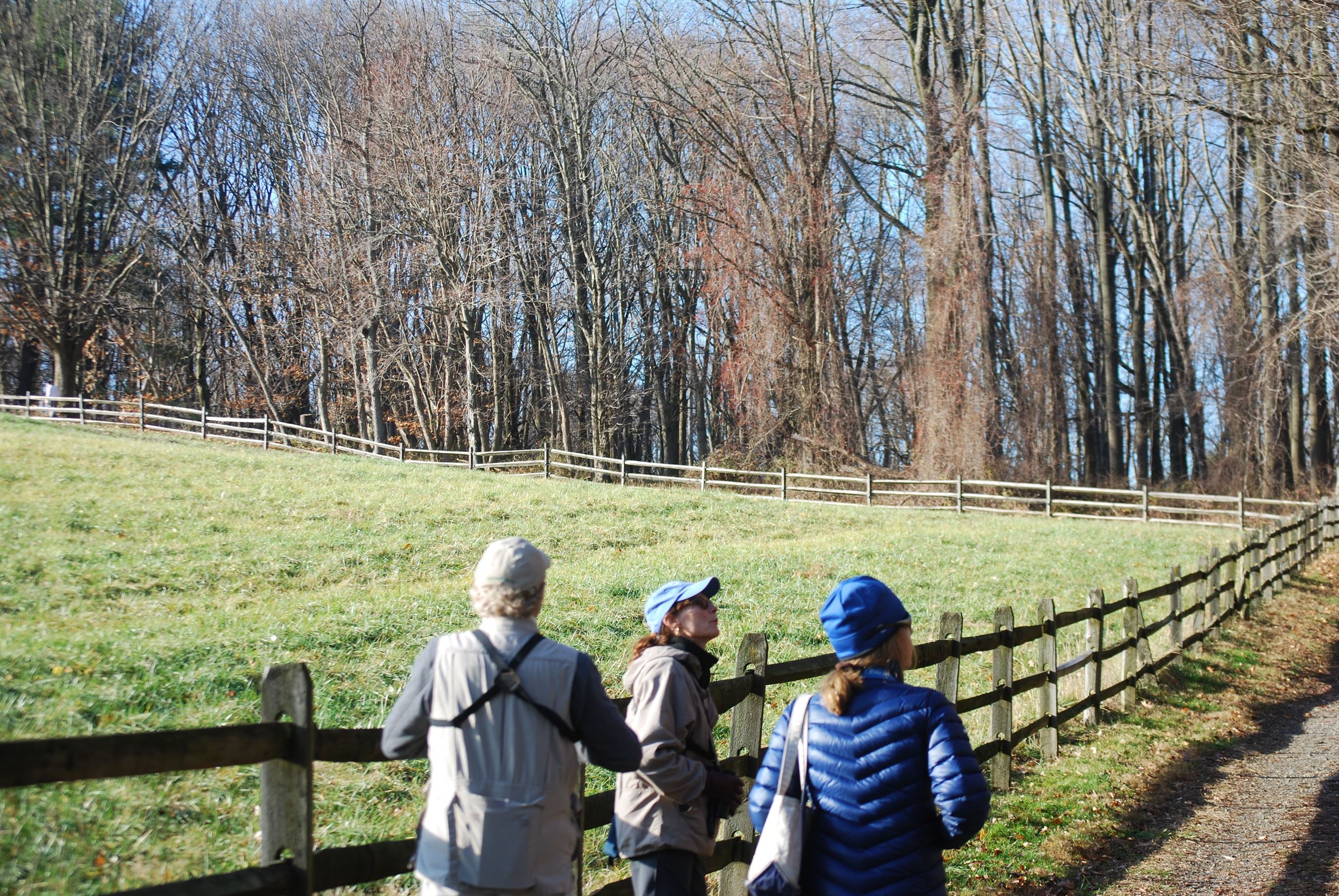 A late fall bird walk at Lorimer Park