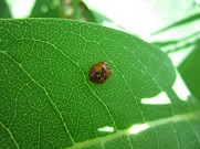 Ladybugs for Little Ones at Norristown Farm Park.jpg